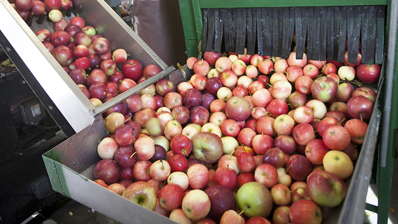 Apples being processed in machinery.